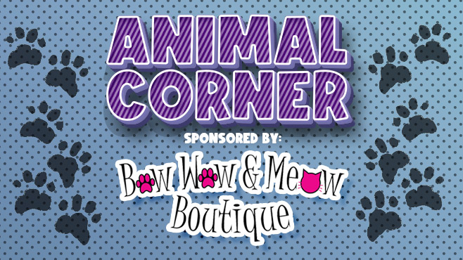 Animal Corner sponsored by Bow Wow and Meow